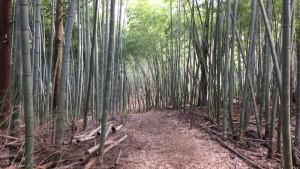 嵐山の竹林(相模原)