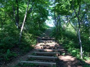 和田峠から陣馬山への登山道