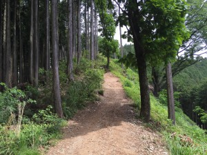 景信山への登山道