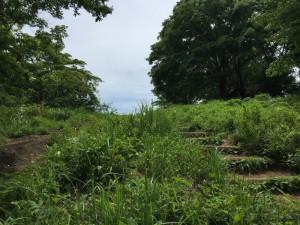 景信山烽火台の台地を望む